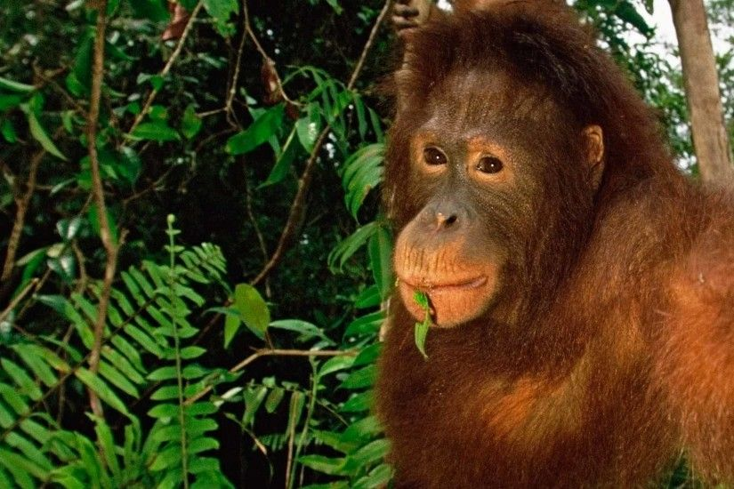 The Best Borneo Orangutan Safaris