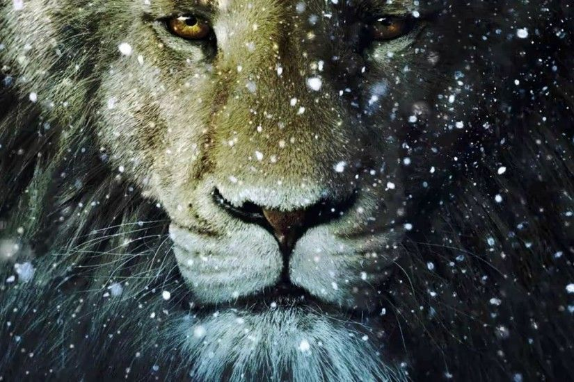 Lion in the snow fall hd wallpaper 1920x1080 - 508 HD Desktop .