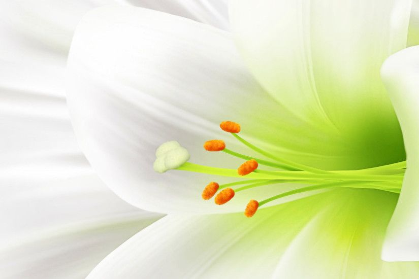 Beautiful White | flower beautiful white wallpapers wallpaper 1920x1080