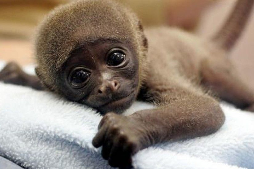 Baby Monkey Wallpapers - Wallpaper Cave