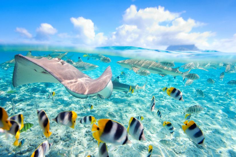 2880x1800 tropical fishes Tropical Fish Wallpapers HD Wallpapers Ocean  2880×1800