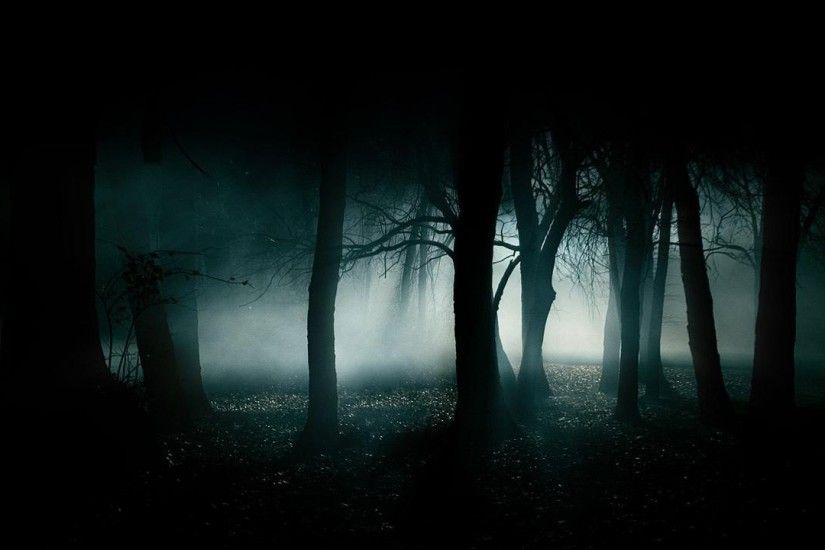 forest-dark-fog-dark-forest-wallpaper(1)