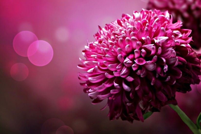 Flower Backgrounds HD .