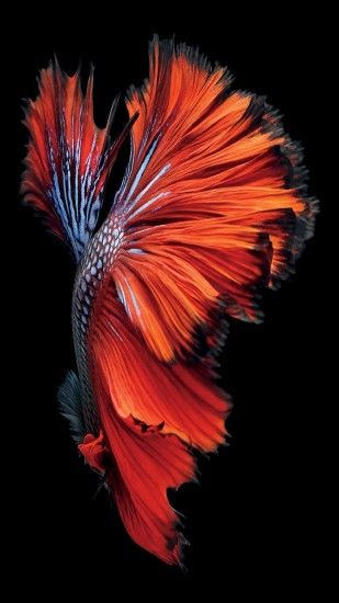 iphone 6s fish red wallpaper ios9