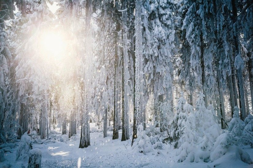 Sun Frost Winter Forest Trees Snow HD Background