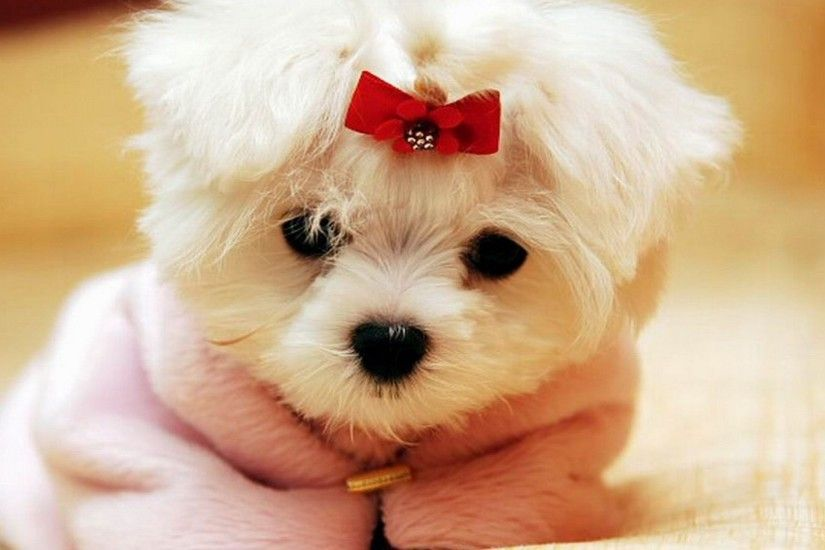 Cute Dog Wallpaper free Download for iphone 5