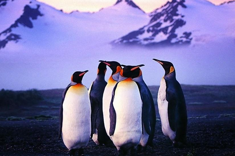 Penguin Wallpaper Free Download