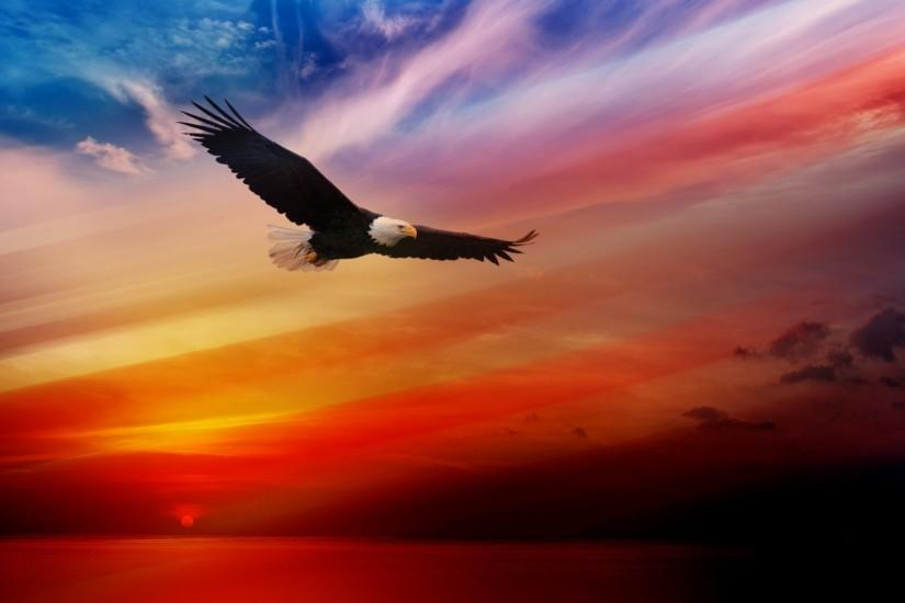 Flying Bald Eagle Digital Image Full HD 1080p