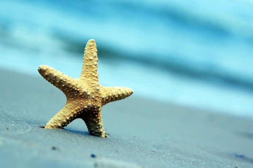 Fantastic Starfish Wallpaper