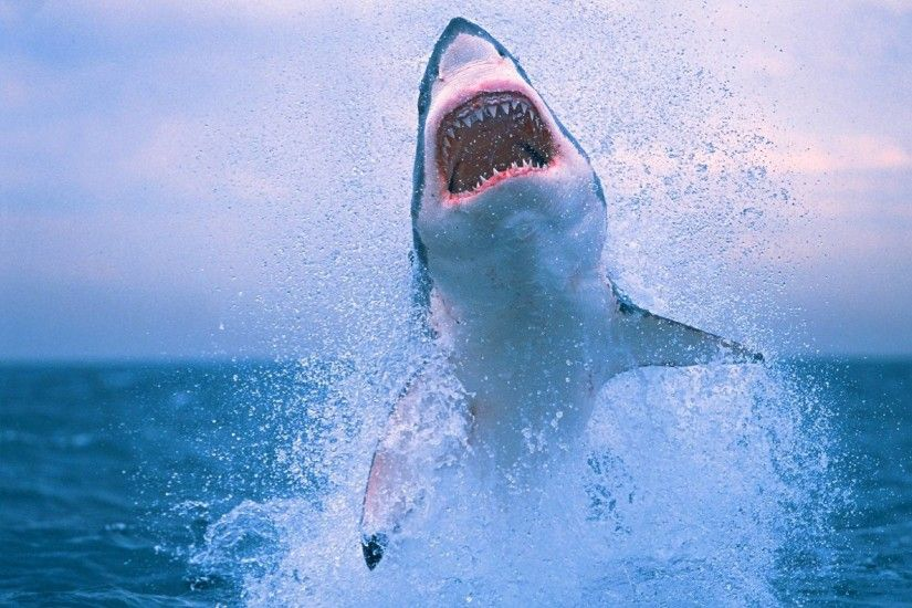 Shark Wallpaper Hd - Free Android Application - Createapk.