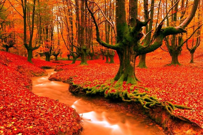 forest, tree, wallpaper,colourful, river backgrounds, seasons, fall, season