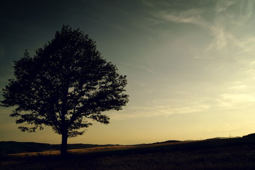 wallpapers, wallpaper, backgrounds, amazing, background, alone, tree .