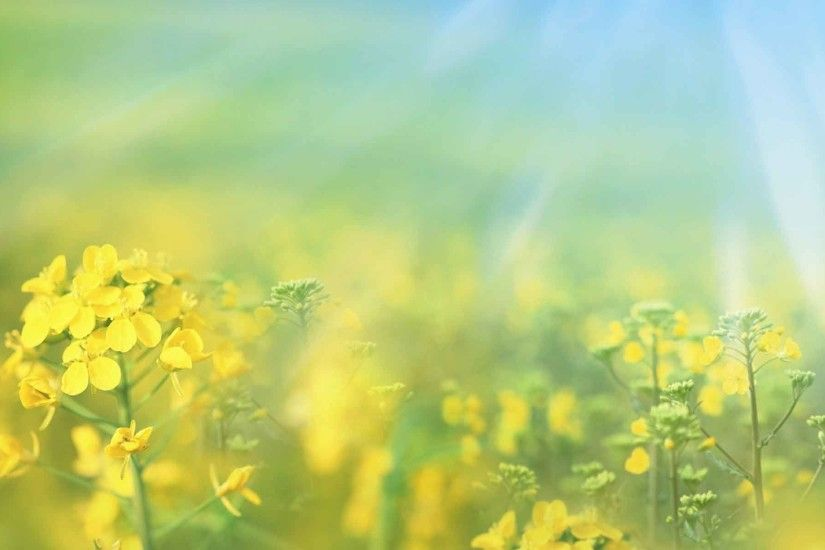 Flowers Dreamy Season Summer Nature Wallpaper For Free Download