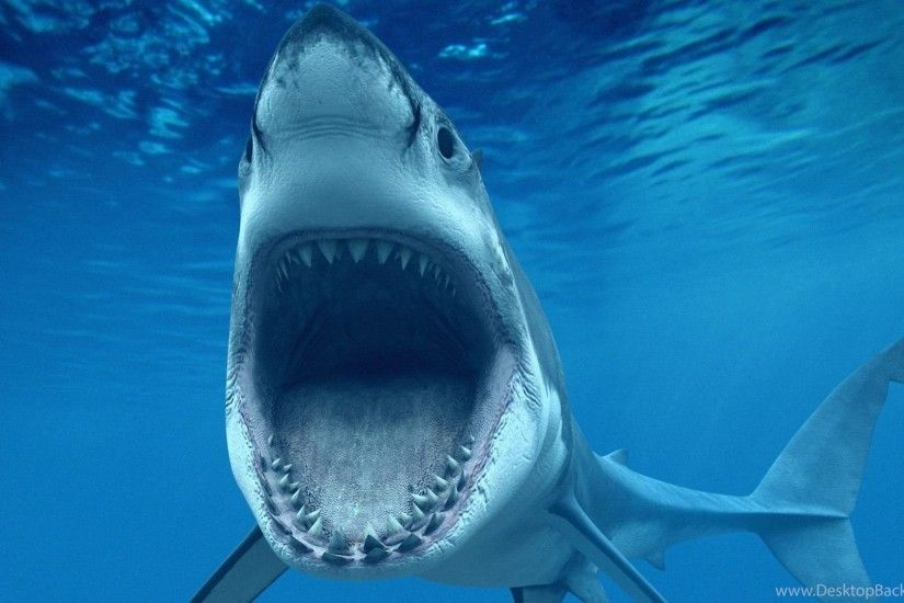 Great white shark wallpapers HD YoYoWallpapers: Download Today's .