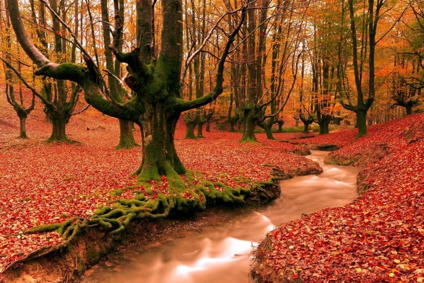 red forest fall season HD free wallpapers backgrounds images FHD .