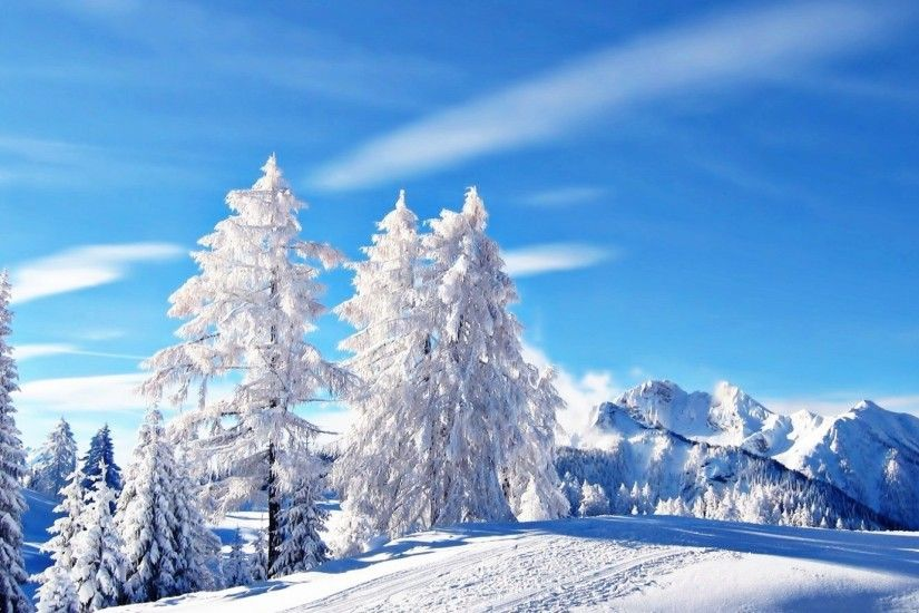 #444466 Color - Snow Trees Winter Nature Wintertime White Desktop  Backgrounds for HD 16: