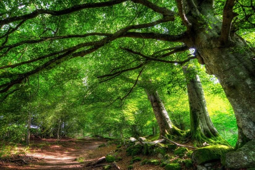 free download forest background 1920x1080
