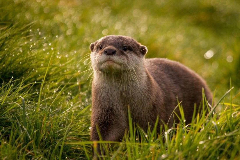 45 Otter Wallpapers | Otter Backgrounds