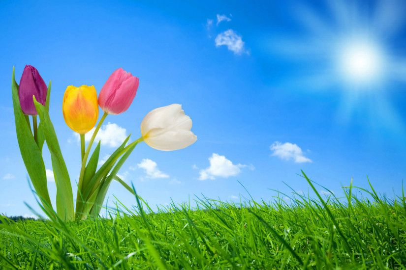 Beautiful Spring Nature Wallpaper