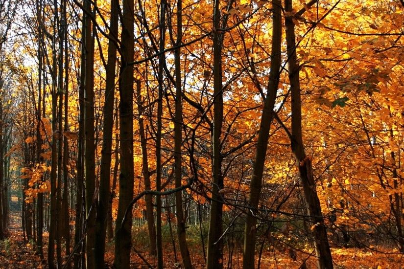 3840x1200 Wallpaper wood, young growth, autumn, leaf fall, trees, naked,