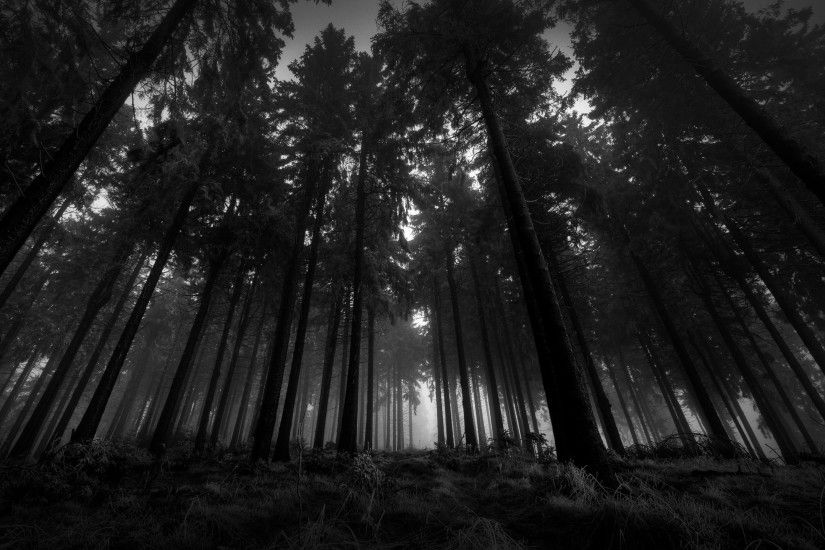 Download Free Black and White Forest Wallpaper.