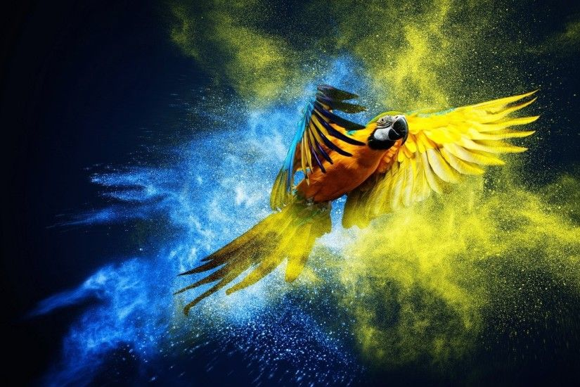 <b>Macaw Parrot Wallpaper</b> - WallpaperSafari