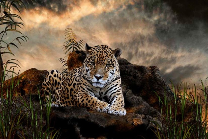 Animal HD Wallpaper - Get the Newest Collection of Animal HD Wallpaper for  your Desktop PCs