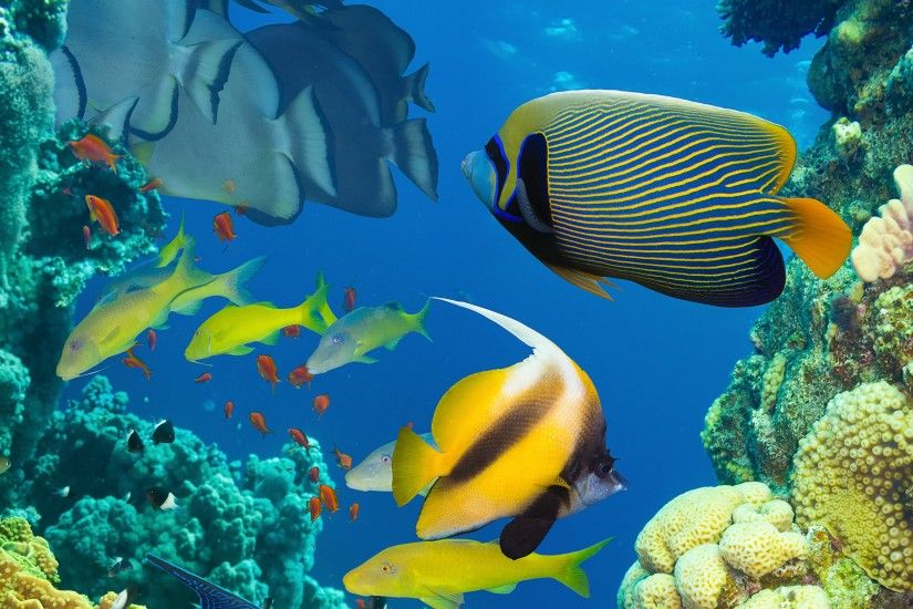Beautiful fish in the sea, underwater, coral reef Wallpaper Preview