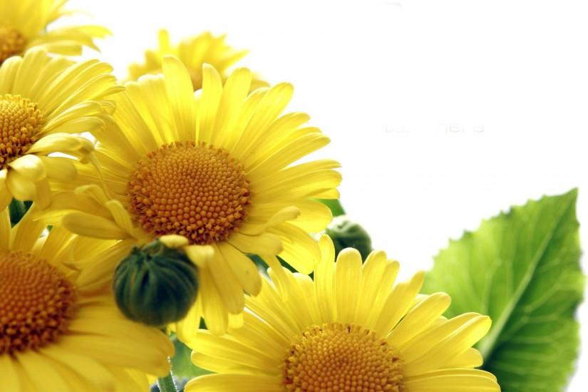 cool sunflower wallpaper 1920x1200