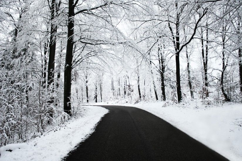 road Snow Black White Winter Forest Nature Wallpapers HD 2560×1600