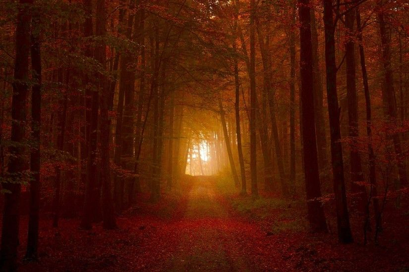 Deep Dark Nature Path Forest Autumn Woods Tunnel 3D Wallpapers
