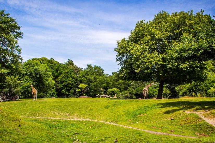 widescreen park background 2975x1700 for mobile