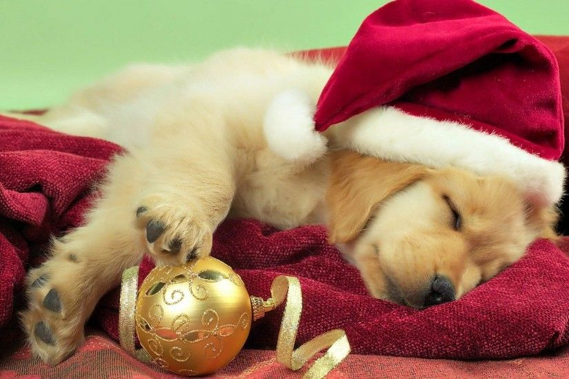 dog christmas puppy wallpaper high resolution - Cute Puppy Christmas  Backgrounds