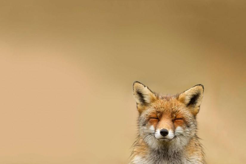 new fox wallpaper 1920x1080 windows 7