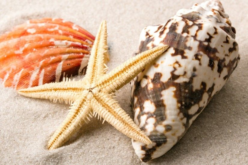 Starfish Tag - Seashells Marine Starfish Shells Sand Beach Wallpaper  Beaches Free Download for HD 16