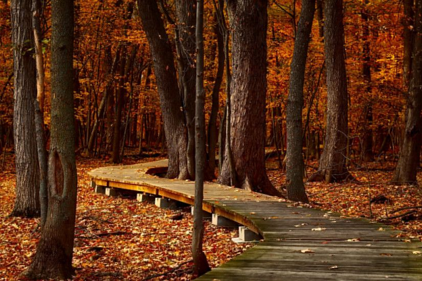 Fall Leaves And Trees HDR Wallpaper.jpg ...