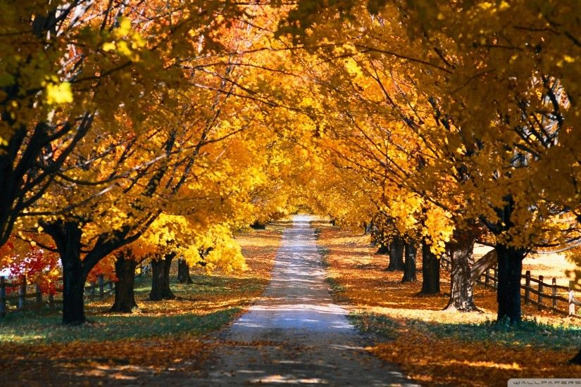 Tree Tunnel Road Autumn Wallpaper 1920x1080 Tree, Tunnel, Road, Autumn