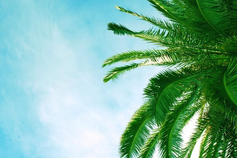 2560x1440 Wallpaper palm tree, krone, branches, leaves, clouds, sky, azure