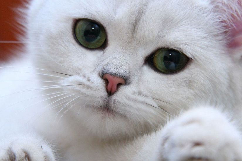 1920x1080 Wallpaper cat, white, eyes, face, green, sweet