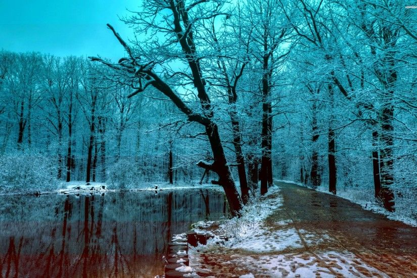 Beautiful Blue Winter Forest In The Evening