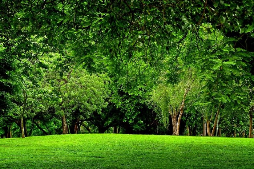 Hd Green Forest. Â«