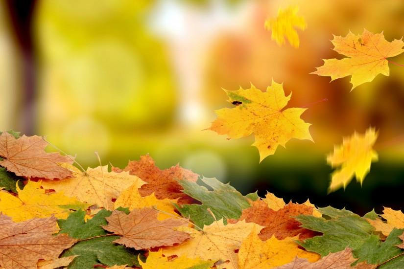 Fall Leaf HD Widescreen Wallpapers
