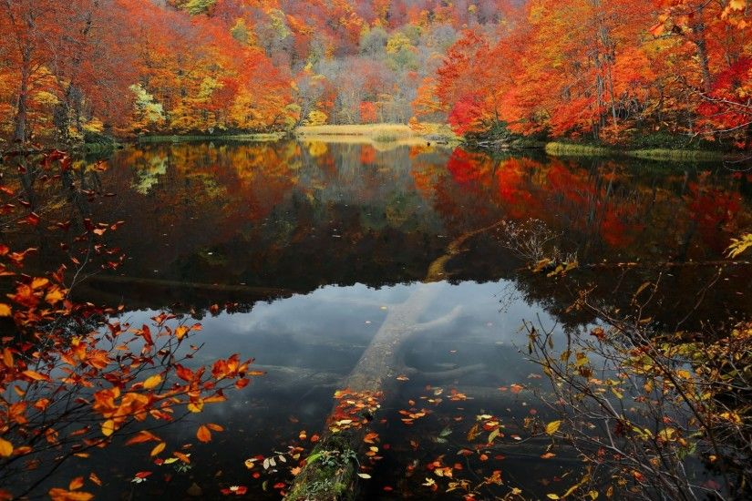 Forest Fall Water Trees Autumn Leaves Lake Canada Lakes Wallpaper Detail