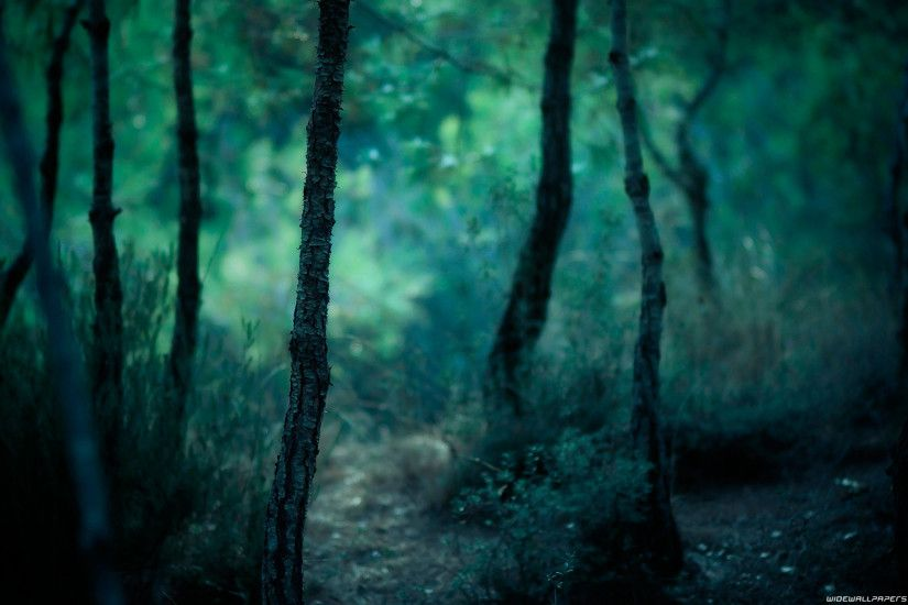 Nature Forest Wallpaper 1920x1200 Nature, Forest, Photography