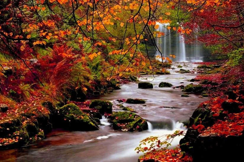 Fox Autumn Wallpapers Hd Autumn Baby Wallpaper #7041122 ...