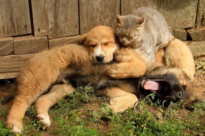Dog puppy cat friends friendship wallpaper | 1920x1200 | 433518 |  WallpaperUP