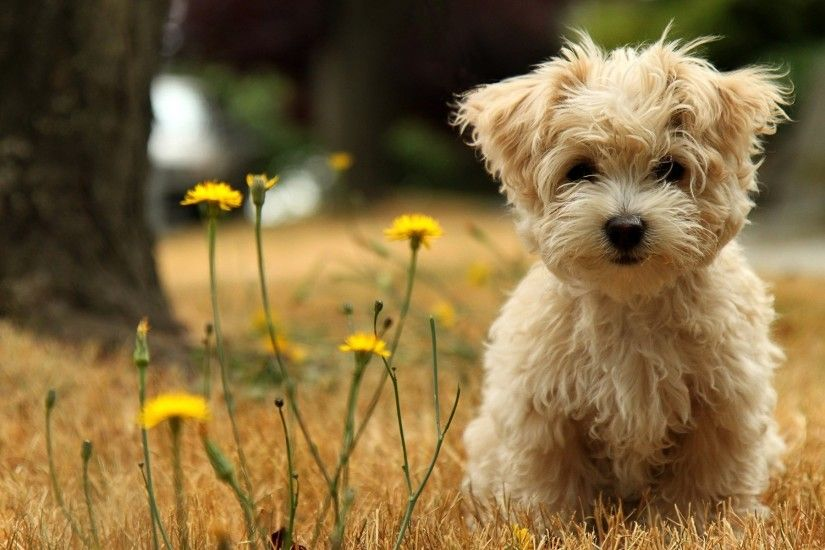 wallpaper.wiki-Cute-Baby-Animal-Background-Download-Free-