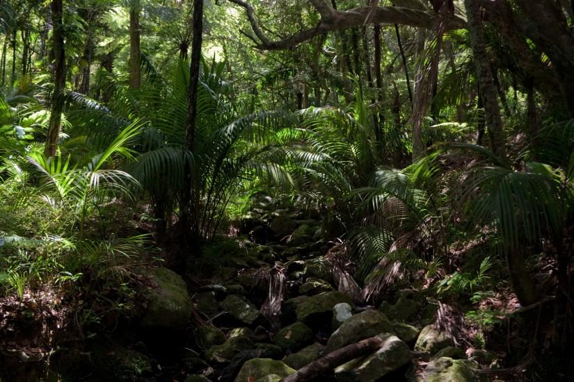 jungle background 1920x1280 hd for mobile