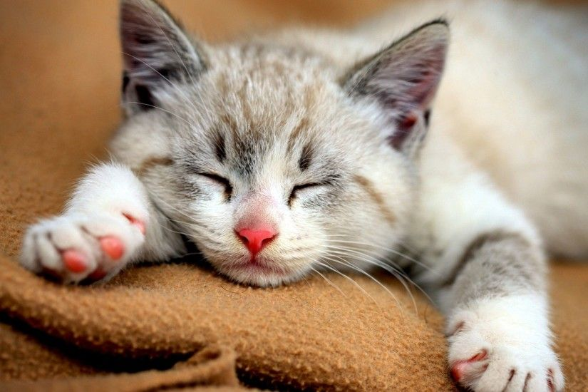2560x1600 px Cute Cats Desktop Images for desktop and mobile
