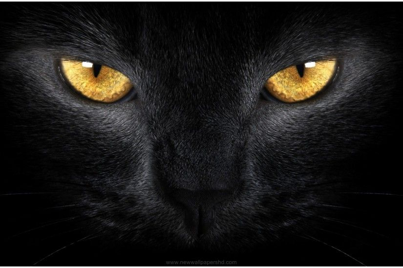 BLACK CAT FACE AND EYES HD WALLPAPER
